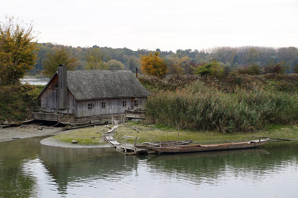 Donauauen-Orth-an-der-Donau-10.jpg