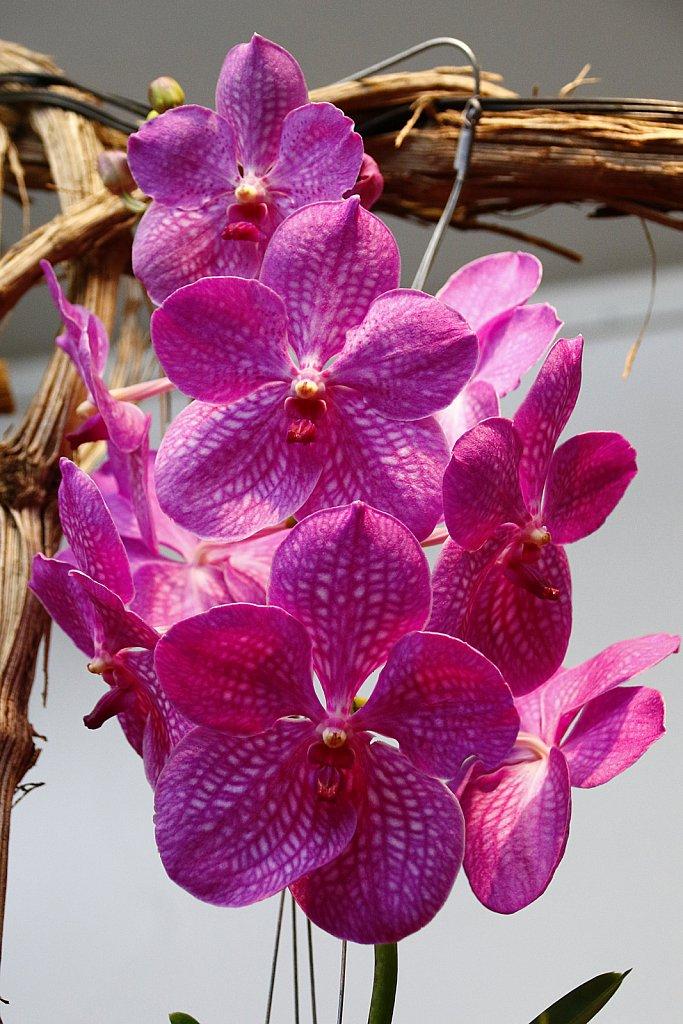 Orchideen-1.JPG