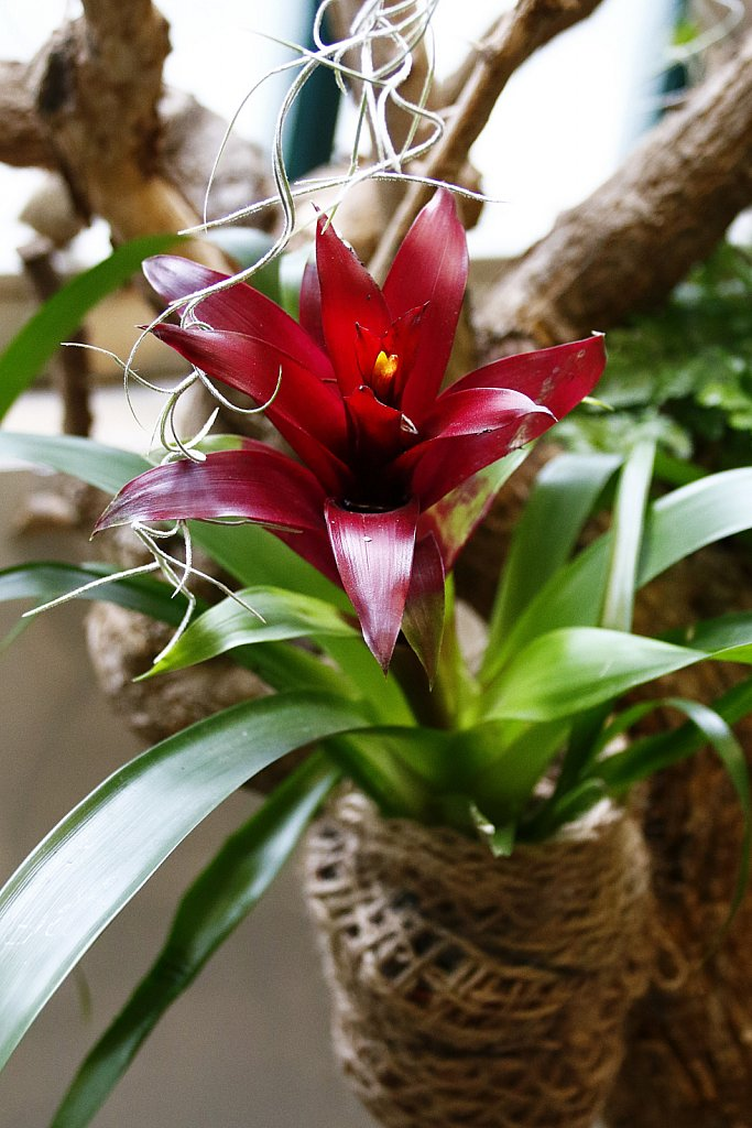 Orchideen-3.JPG