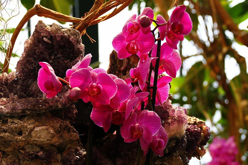 Orchideen-9.JPG