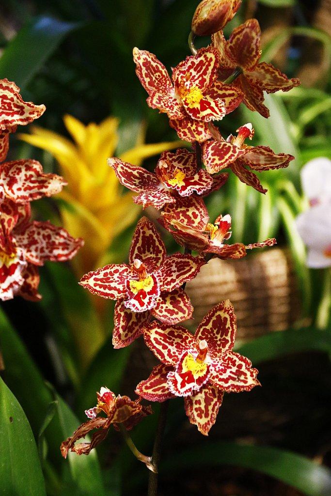 Orchideen-10.JPG