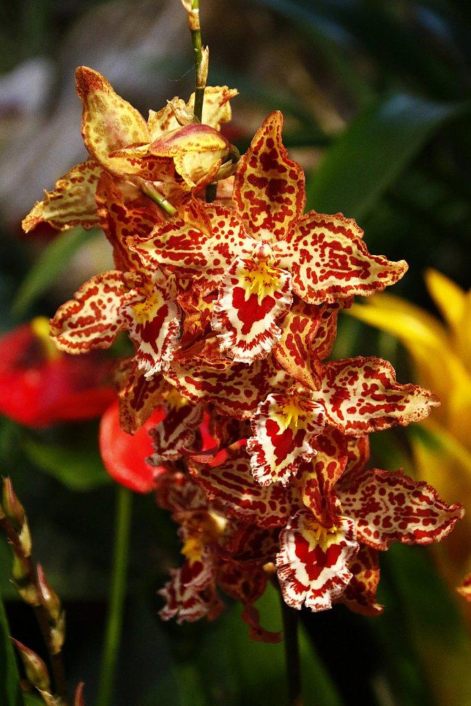 Orchideen-11.JPG