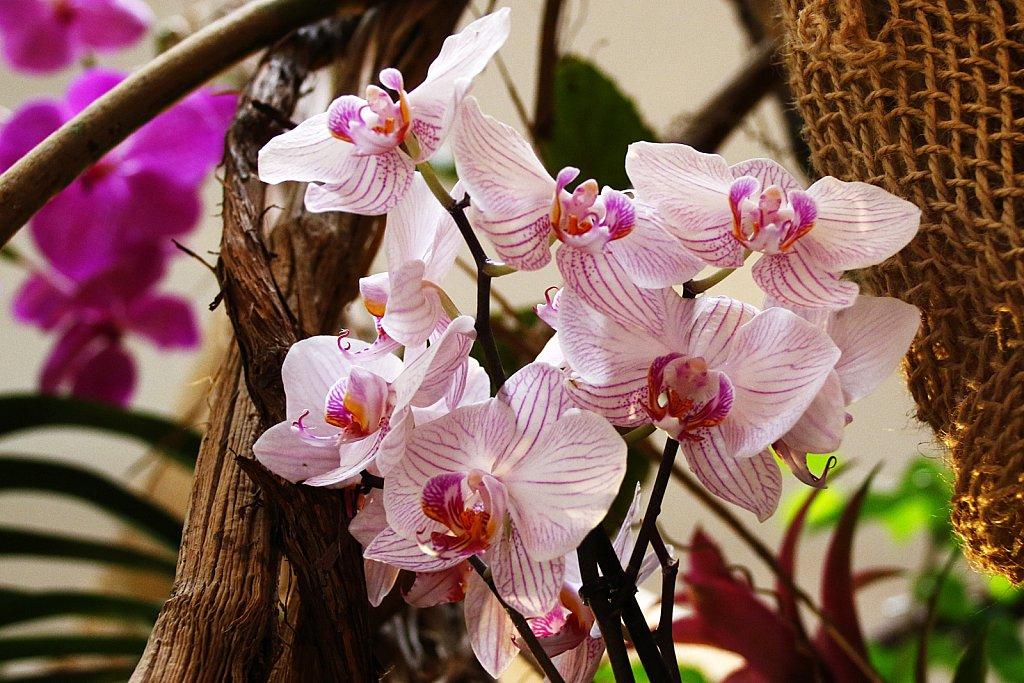 Orchideen-14.JPG