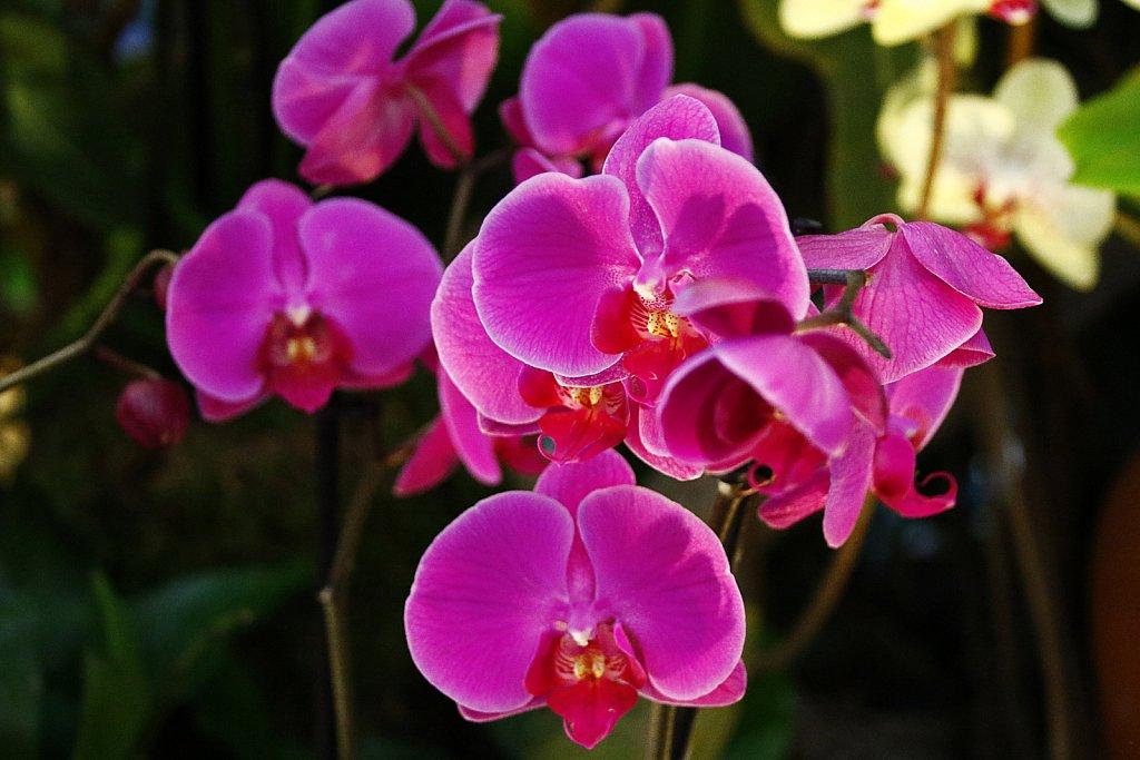 Orchideen-15.JPG