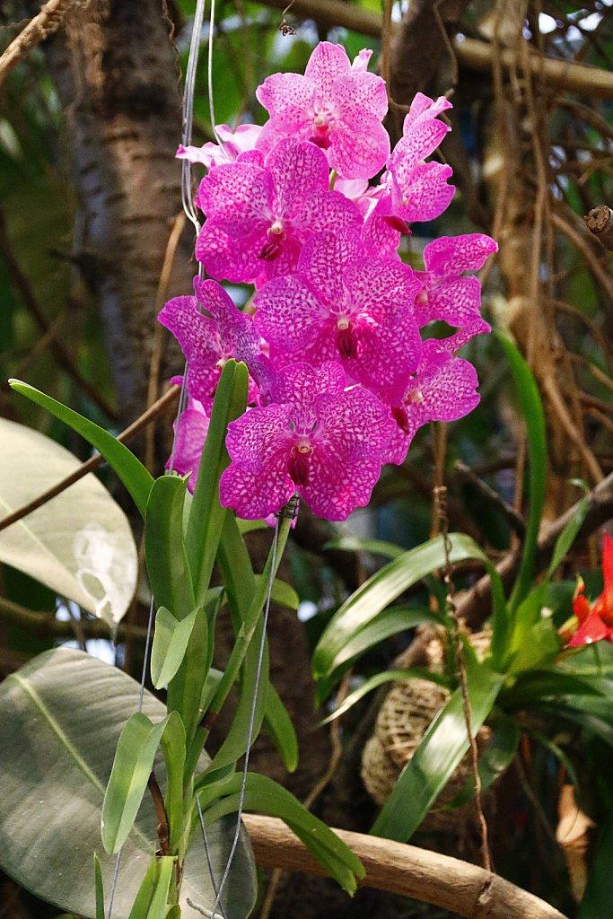 Orchideen-17.JPG
