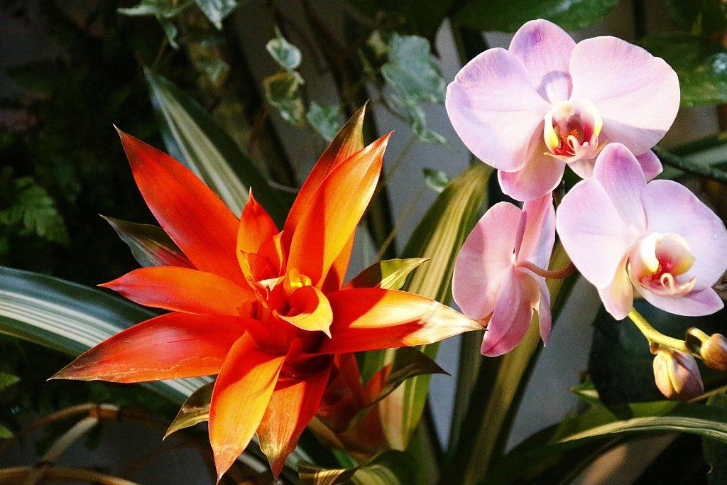 Orchideen-18.JPG