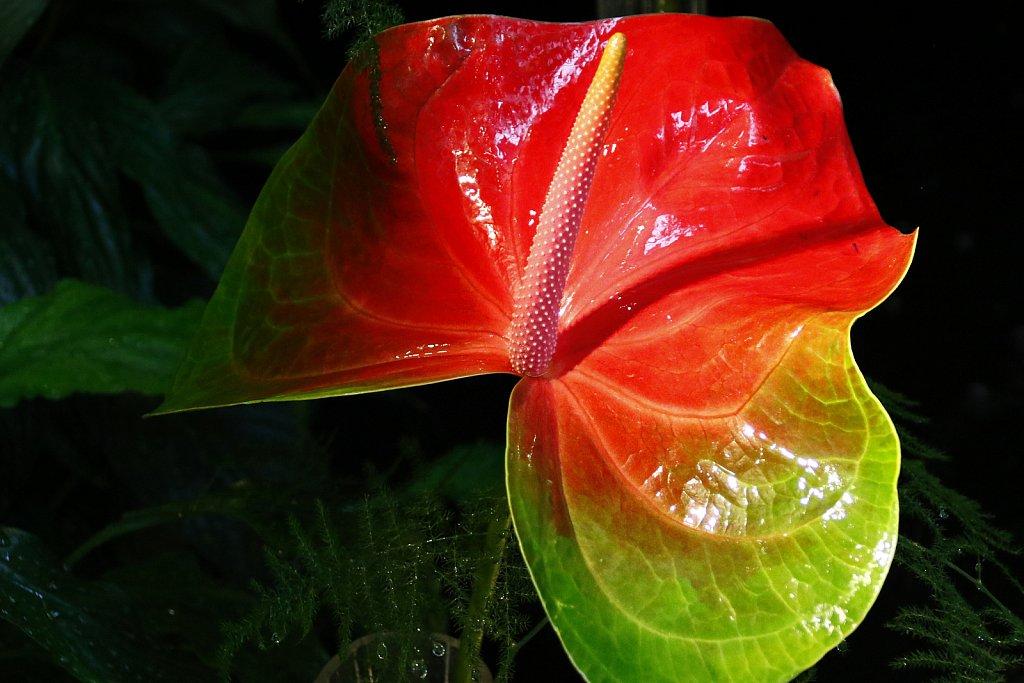 Orchideen-19.JPG