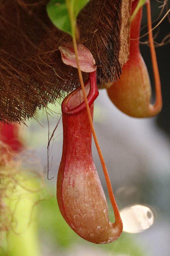 Orchideen-25.JPG