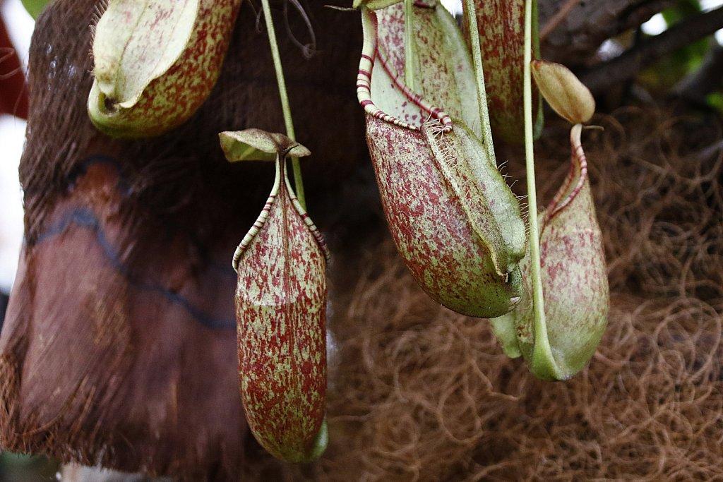 Orchideen-27.JPG