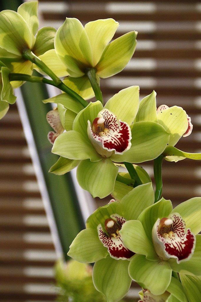 Orchideen-37.JPG