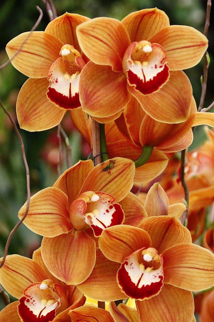 Orchideen-38.JPG
