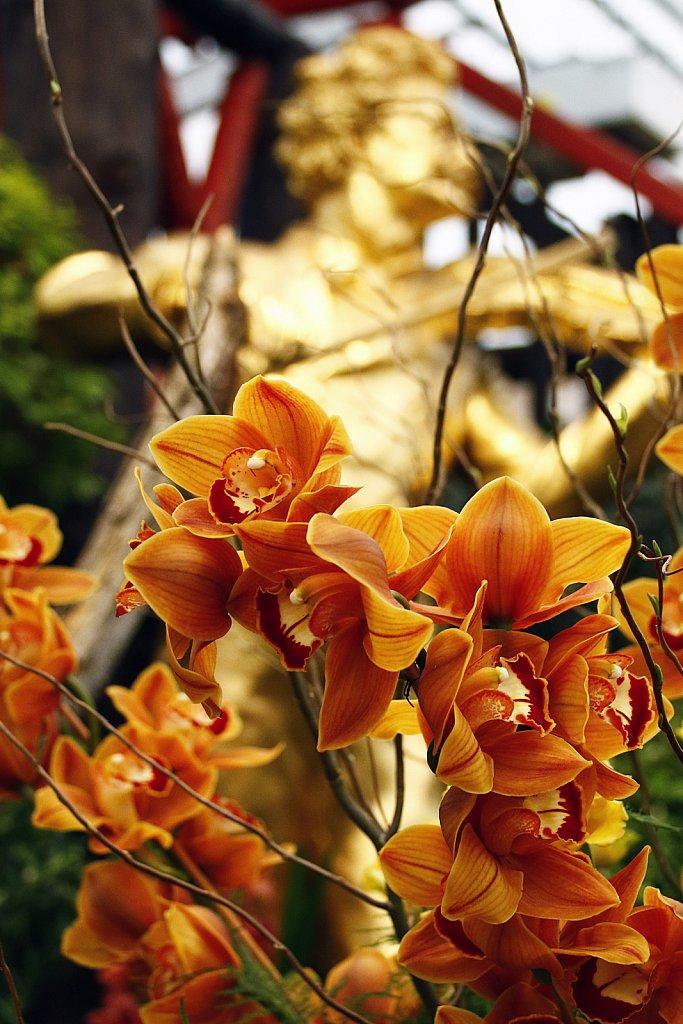 Orchideen-39.JPG