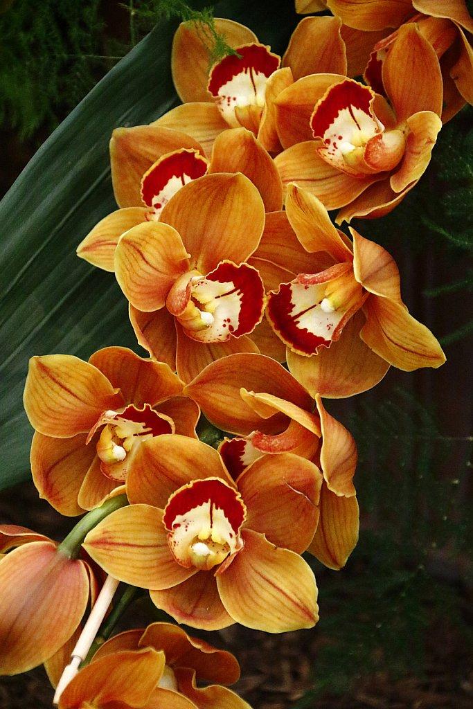 Orchideen-41.JPG
