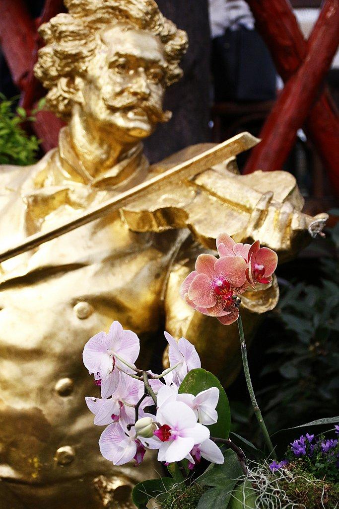 Orchideen-42.JPG