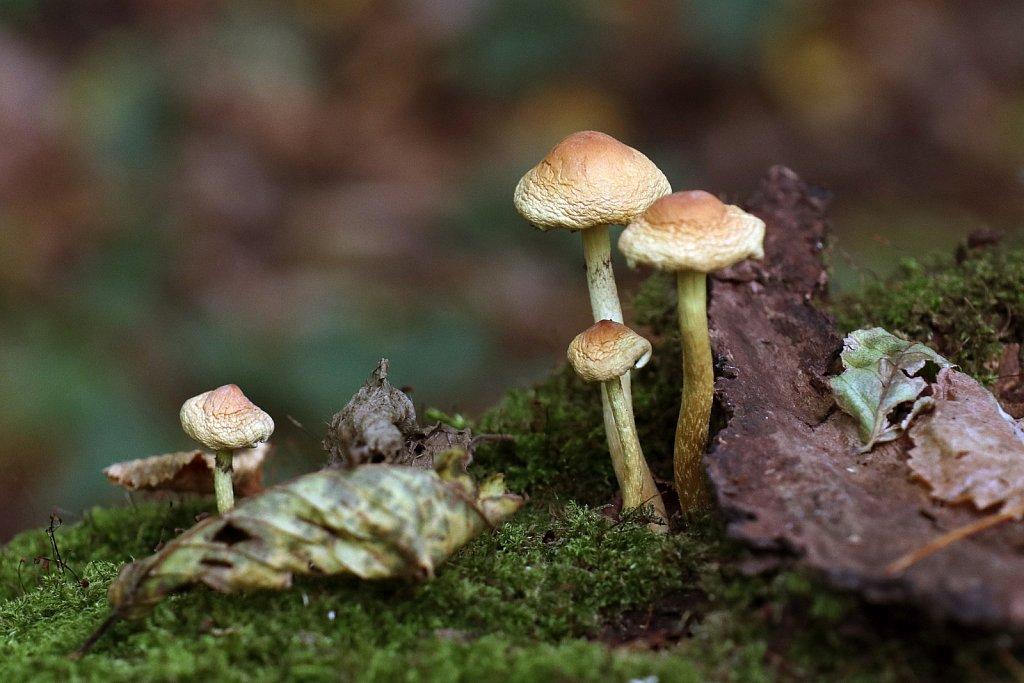 Wueste-Herbst-12.JPG